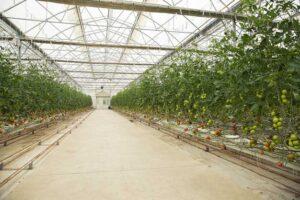 Entrada 1 Tipos de cubiertas para invernaderos