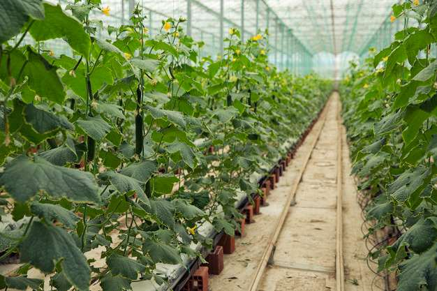 Control ambiental en invernaderos