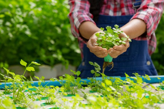Ventajas de los cultivos en invernadero