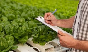 rentabilidad agricultura hidropónica