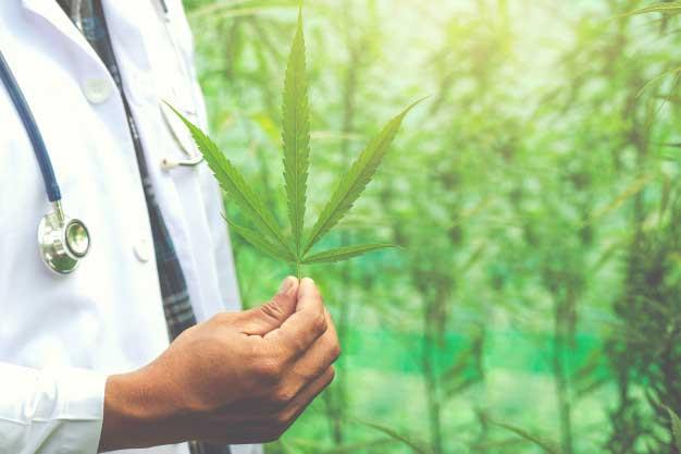 El invernadero que necesitas para cultivos de cannabis medicinal
