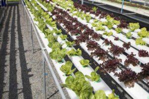 ahorrar dinero con el cultivo hidropónico