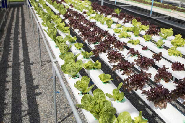 Como ahorrar dinero con el cultivo hidropónico