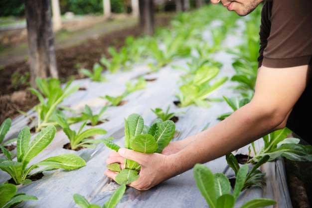 Como seleccionar el cultivo adecuado en invernaderos