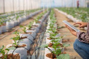 puntos clave para mejorar tu invernadero