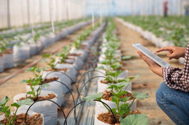 Los tres puntos clave para mejorar tu invernadero