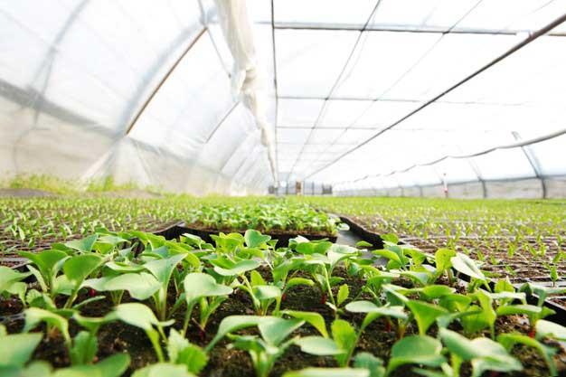 Cómo funciona un invernadero y por qué es mejor para la rentabilidad