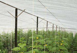Sostenibilidad en cultivos de invernadero