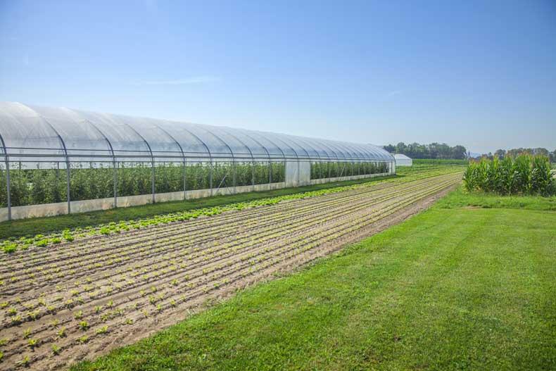10 factores para ubicar tu invernadero que tienes que controlar