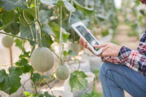 tendencias en los cultivos en invernadero