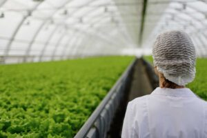 Agricultura ecológica en invernadero