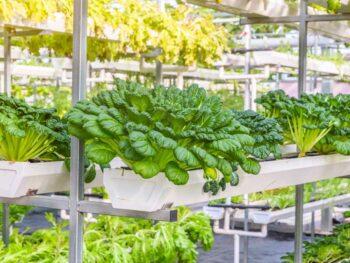 Temperatura ideal para cada cultivo de invernadero
