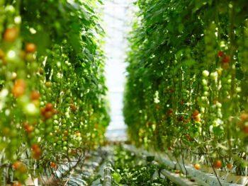 Los cultivos de invernadero más rentables